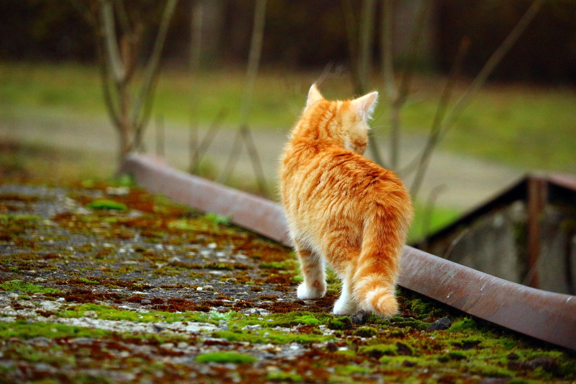 cat-1099754_1920