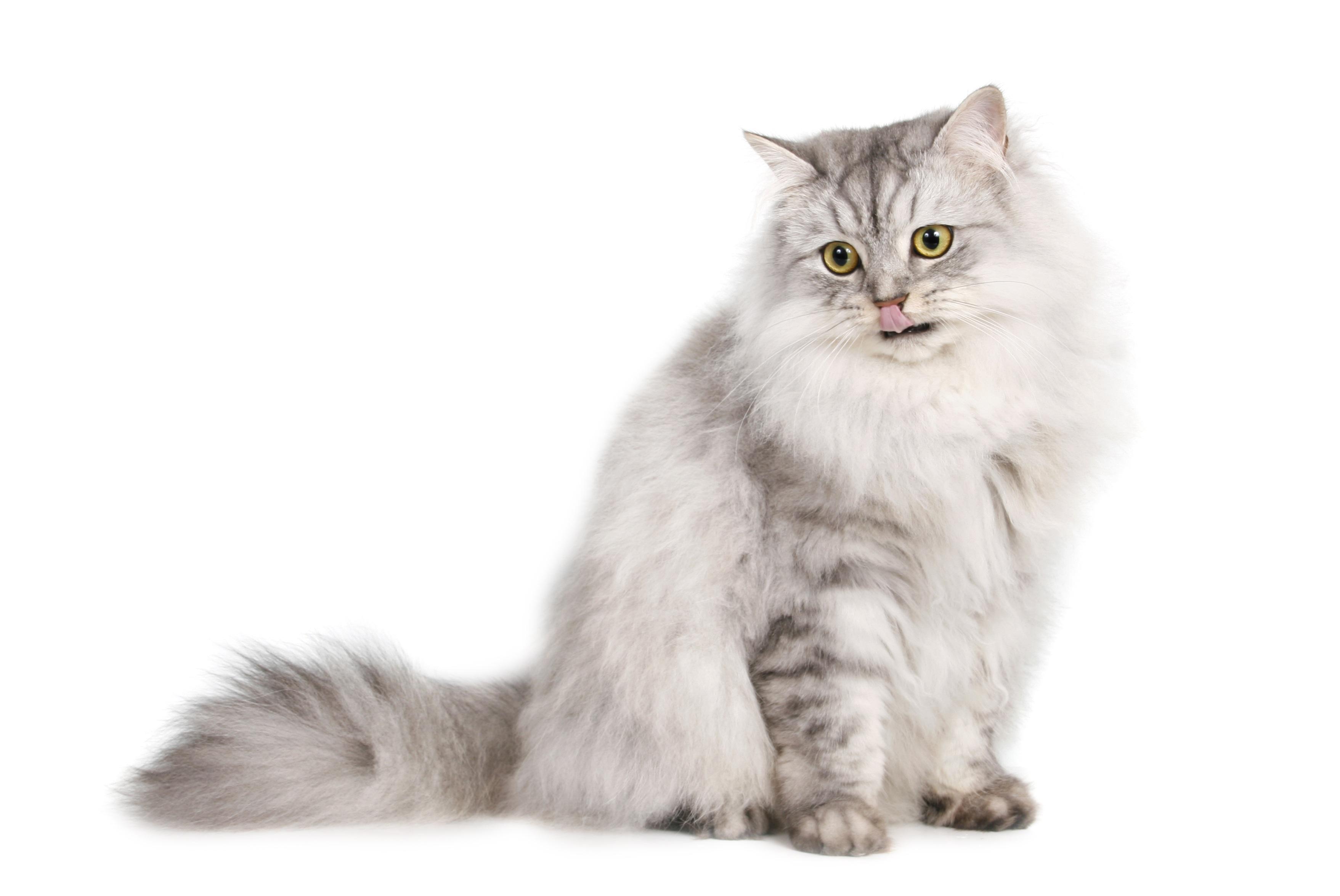 cat-869218